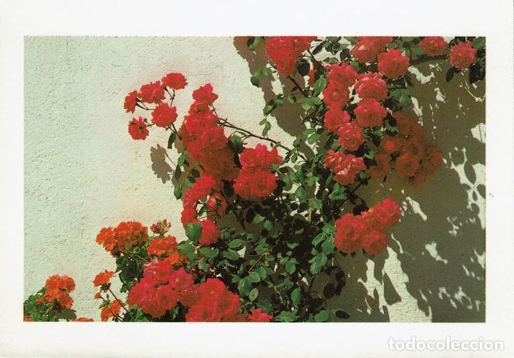 Postales: Lote 20 postales artísticas m. brossa. am4. barcelona. sin circular - Foto 8 - 191839225