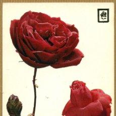Postales: POSTAL ROSAS. Lote 214815871