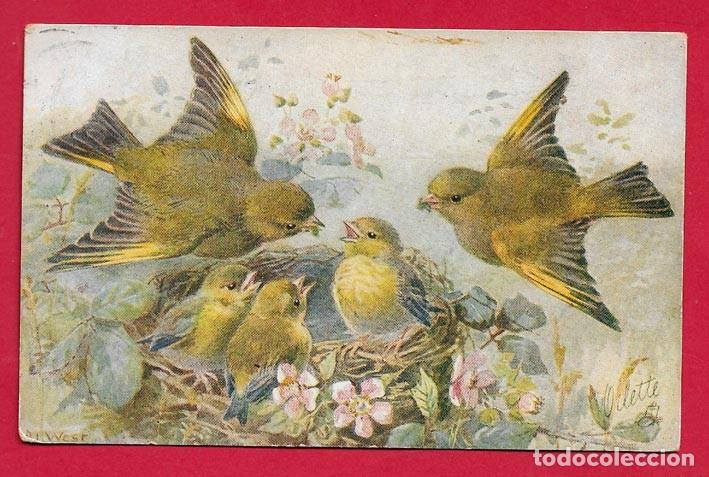 AE981 PAJAROS AVES BIRDS VERDERONES AL NIDO CON SUS CRIAS POSTAL FIRMADA 1906 (Postales - Postales Temáticas - Estilo)