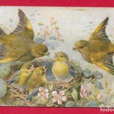 Postales: AE981 PAJAROS AVES BIRDS VERDERONES AL NIDO CON SUS CRIAS POSTAL FIRMADA 1906. Lote 224660658