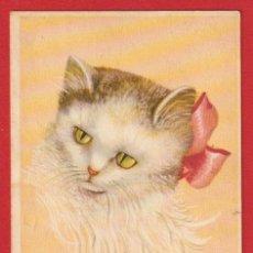Postales: AC280 ANIMALES GATOS GATO GATA KITTEN. Lote 224720143