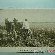 Postales: 4050 CANADA AGRICULTURA ALFALFA ETNICA ETHNIC PRECIOSA OTRAS SIMILARES EN MI TIENDA COSAS&CURIOSAS. Lote 26490235