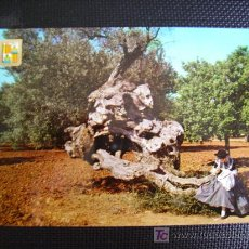 Postcards - palma de mallorca, olivo milenario y mallorquina - 11253819