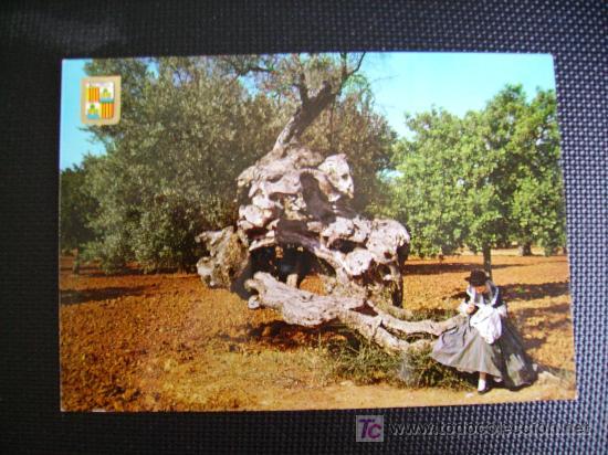 MALLORCA, PALMA, OLIVO MILENARIO Y MALLORQUINA (Postales - Postales Temáticas - Étnicas)