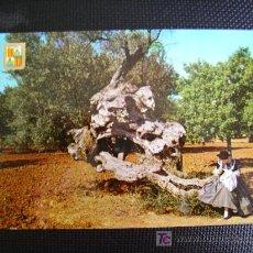 Postcards - mallorca, palma, olivo milenario y mallorquina - 11253826