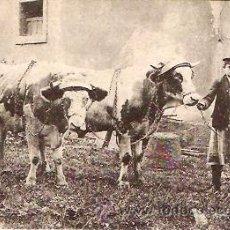 Postales: POSTAL TRABAJO AGRICOLA BUEYES DE TIRO EN EL CAMPO . Lote 12554757