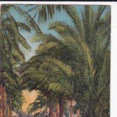 Postcards - 6644 Scènes et Types Sous les Palmiers Lévy y Neurdein (sin circular) - 34846220