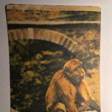 Postales: RM400 TARJETA POSTAL ORIGINAL AÑOS 20/30 ARABE COLECCION IDEALE P.S.. Lote 79564777