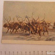 Postales: POSTAL CON FOTO DE CARRERA CON CIERVOS. AÑO 1953. Lote 127483931