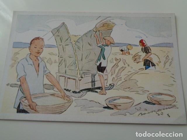 Postales: LE RIZ D`INDO-CHINE. LOTE DE 5 POSTALES ILUSTRADAS DE DICHA SERIE FRANCESA. SIN USO - Foto 5 - 141899934