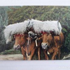 Postales: BUEYES TIPO VASCO. Lote 156055074
