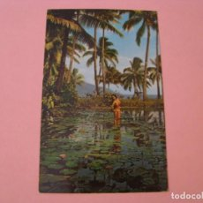 Cartoline: POSTAL DE TAHITI. TROPICAL BEAUTY. . Lote 167577824
