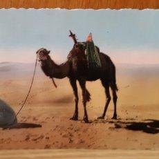 Postales: ANTIGUA POSTAL ETNICA DE ARGELIA - ALGERIE. Lote 173068324