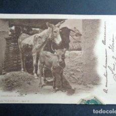 Postales: POSTAL LA BOYERA. COLECCIÓN CÁNOVAS. COMPAÑEROS DE FATIGAS. PRIMERA EDICIÓN. CIRCULADA, 1902. Lote 197445108
