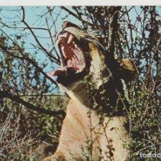 Postales: LOTE X-POSTAL MALAWI AFRICA 1967 LEON. Lote 199102427