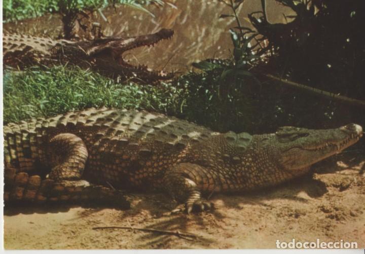LOTE X-POSTAL MALAWI AFRICA 1967 COCODRILO FAUNA (Postales - Postales Temáticas - Étnicas)