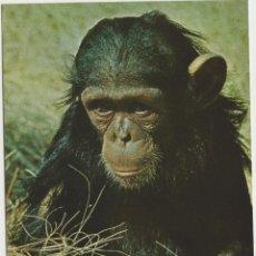 Postales: LOTE X-POSTAL MALAWI AFRICA 1967 CHIMPACE FAUNA. Lote 199103088