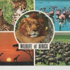 Postales: LOTE X-POSTAL AFRICA KENYA LEON SELLOS. Lote 199104853