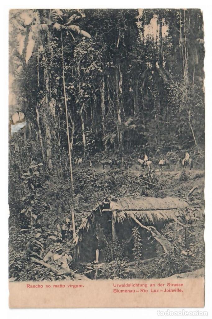 1909 - BLUMENAU (BRASIL) - RANCHO EN LA SELVA VIRGEN (Postales - Postales Temáticas - Étnicas)