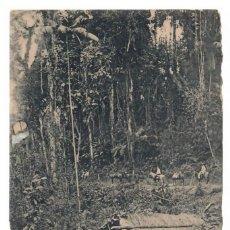 Postales: 1909 - BLUMENAU (BRASIL) - RANCHO EN LA SELVA VIRGEN. Lote 222182207