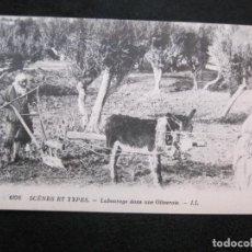 Postales: HOMBRE Y MUJER-LABRANDO EN UN OLIVAR-TIPO ARABE-TIPO ORIENTE-EDICION LL-POSTAL ANTIGUA-(79.768). Lote 255005355