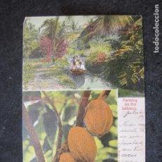 Postales: BUSCANDO EL CACAO-POSTAL ANTIGUA-(81.790). Lote 269742163