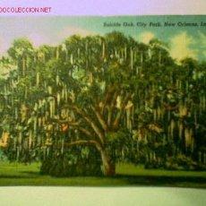 Postales: POSTAL ANTIGUA DE LA ENCINA ASESINA EN NEW ORLEANS. EDITADA EN U.S.A.. Lote 16478191