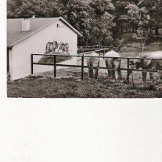 Postales: KRONBERG I. TS. - OPEL-TIERPARK. Lote 21114454