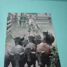 Postales: POSTAL FRANCIA. EN CAMARGUE. TAUREAUX CAMARGUAIS. TOROS. POSTAL SIN CIRCULAR.. Lote 31561102
