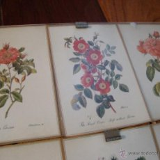 Postales: LOTE 12 POSTALES FLORES ANTIGUAS ENMARCADAS. Lote 40408970