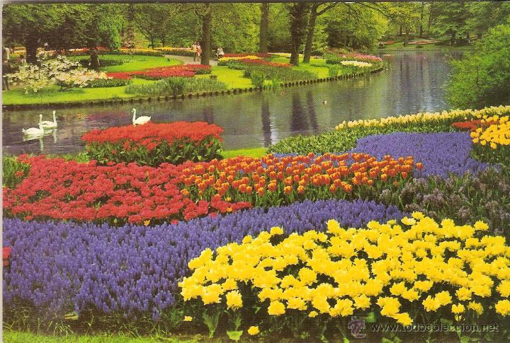 Holanda en flor greeting from holland ecc 60 comprar postales holanda en flor greeting from holland ecc 601 sin circular postales m4hsunfo