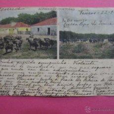 Postales: ANTIGUA POSTAL PORTUGUESA ALFEZEIRAO UNION PASTALE UNIVERSELLE 1903 TEMA TAURINO TOROS EN EL CAMPO. Lote 53499839