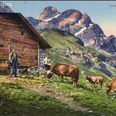 Postales: SUIZA/SWITZERLAND- AUF DER ALP - VACAS/VACA-AÑOS 10/20 - PHOTO & KARTEN CENTRALE-ALPES SUIZOS-ZÜRICH. Lote 62212824