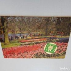 Postales: HOLLAND IN BLOEMENTOOI. HOLLAND IN FLOWERDECORATION. LA HOLLANDE EN PARURE DES FLEURS.... Lote 71601811