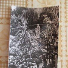 Postales: 4180 ROMANIA ROUMANIE RUMANIA CLUJ NAPOCA GRADINA BOTANICA 1963. Lote 100543071