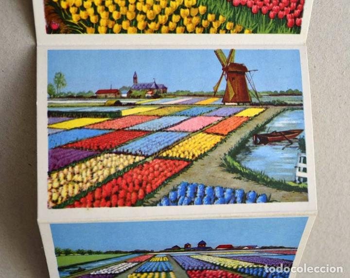 Postales: libro con 12 postales holanda el pais de las flores hollande le pays de fleurs - Foto 2 - 101515659