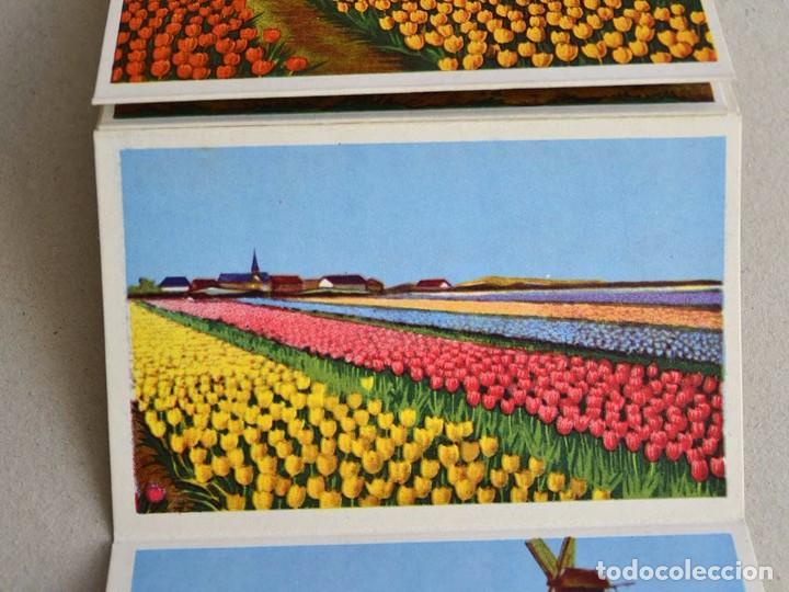 Postales: libro con 12 postales holanda el pais de las flores hollande le pays de fleurs - Foto 3 - 101515659