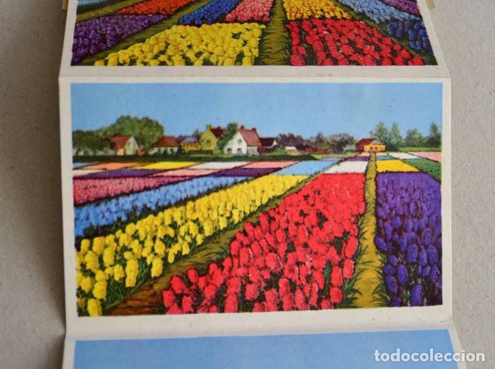 Postales: libro con 12 postales holanda el pais de las flores hollande le pays de fleurs - Foto 4 - 101515659