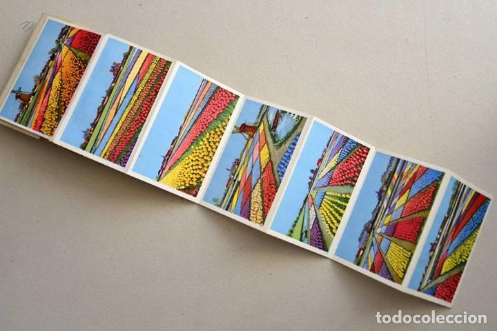 Postales: libro con 12 postales holanda el pais de las flores hollande le pays de fleurs - Foto 5 - 101515659