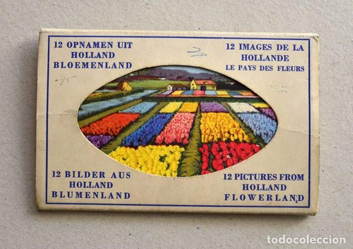 Postales: libro con 12 postales holanda el pais de las flores hollande le pays de fleurs - Foto 6 - 101515659