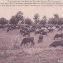 Postales: POSTAL FRANCIA - ET COURSES DE TAURAUX A LA PROVENCALE - UNE MANADE. Lote 101912503