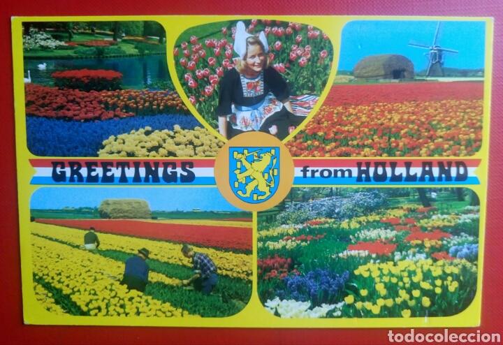 Bonita postal greeting from holland tulipanes h comprar postales bonita postal greeting from holland tulipanes holanda en flor postales postales extranjero europa m4hsunfo