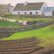 Postales: LAZY BEDS. THE TRADITIONAL WAY OF GROWING POTATOES. Lote 145954378