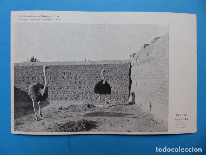 Postales: EGIPTO - 22 POSTALES DIFERENTES - AÑOS 1920-30 - Foto 12 - 148748178