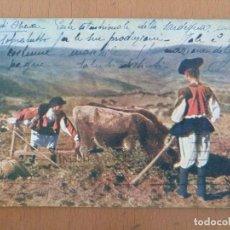 Postales: POSTAL CERDEÑA IN TERRA DI OLIENA AUTOCROMIA PELLERANO CIRCULADA AÑOS 20 ITALIA. Lote 157337702