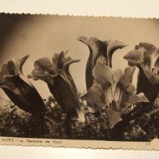 Postales: FLORES DE LOS ALPES. Lote 191413205