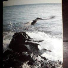 Postales: Nº 36001 POSTAL PORTUGAL MEDITACION RELIGIOSA JUAN PABLO II GAVIOTA. Lote 194759721