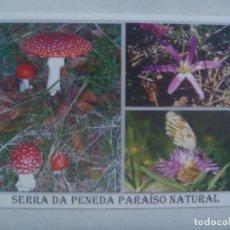 Postales: POSTAL DE SERRA DA PENEDA ( PORTUGAL ): PARAISO NATURAL, FLORA . CIRCULADA A SEVILLA. Lote 195236878