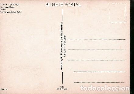 Postales: Portugal & Maxi, 100 Años del Zoológico de Lisboa, Chita, Acinonyx jubatus, Lisboa 1984 (170 ) - Foto 2 - 198603523