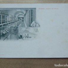 Postales: POSTAL - CARTOLINA - POSTCARD. POMPEYA - POMPEI. INTERNO DEL MUSEO. DORSO SIN DIVIDIR. Lote 206213902